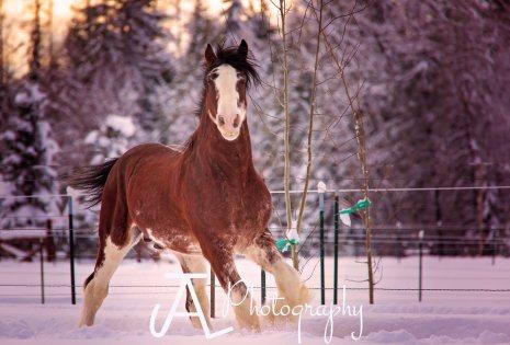 Stallion-1